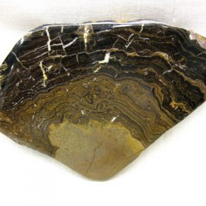 Fossil Cretaceous Age Freshwater Stromatolite from Bolivia South America