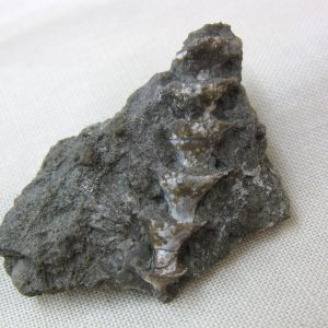 Fossil Mississippian Age Archimedes Bryozoa from Kentucky