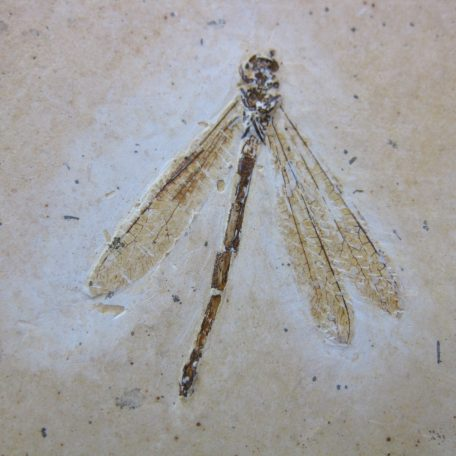 cretaceous brazil crato formation insect 101a