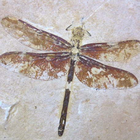 cretaceous brazil crato formation insect 82a