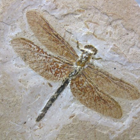 cretaceous brazil crato formation insect 87a
