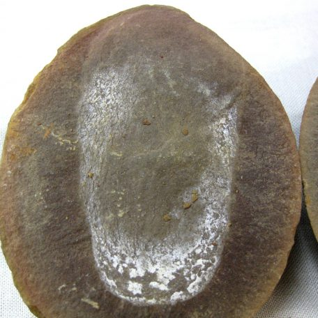 mazon creek jellyfish nodule 20a