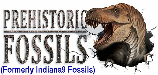 Indiana9 Fossils